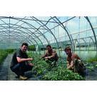 En Livradois-Forez, une ferme intercommunale pour s'alimenter en légumes bio (63)